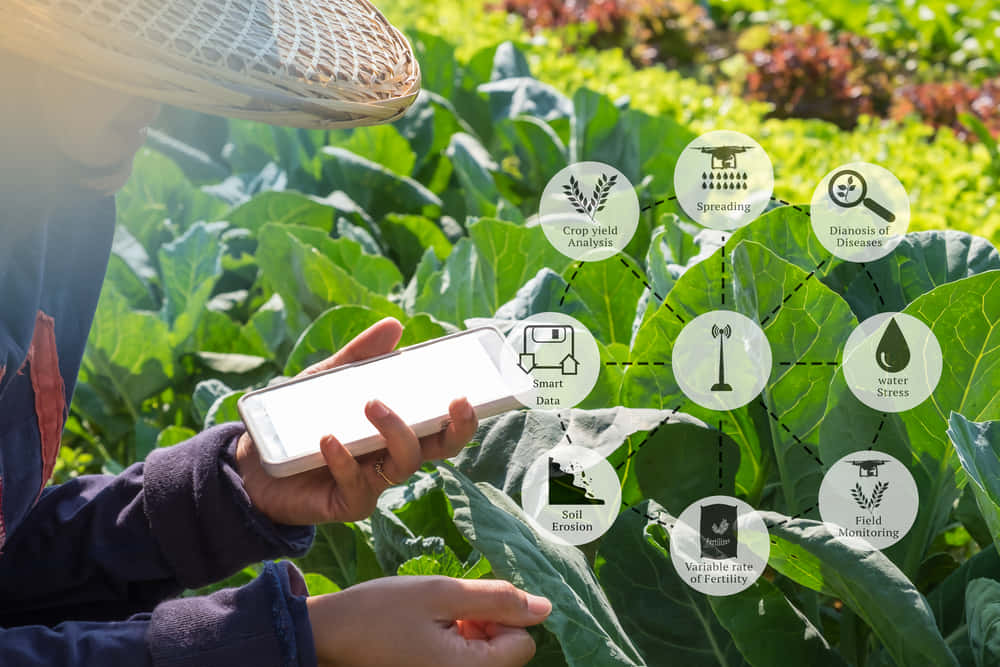 Agritech startup AgroWave