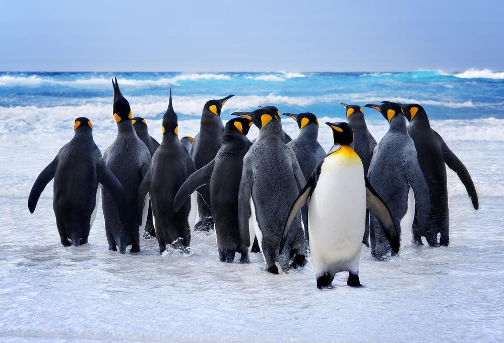 ペンギンの首都