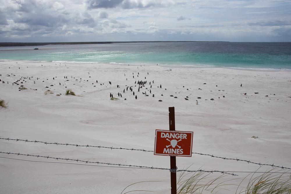 地雷により立ち入り禁止となっているエリアを歩くペンギンたち