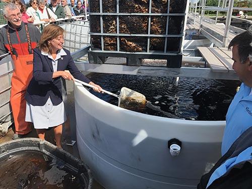 ブルワリーの廃水で魚を養殖