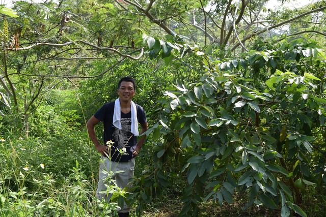 自然と共生するオーガニックコーヒー農園プロジェクト