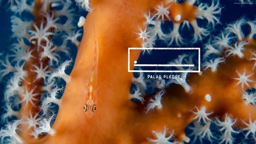 オレンジ色のサンゴの周りで小さな魚が泳いでいる