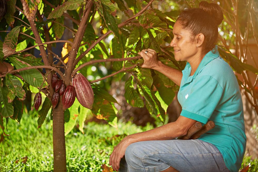 カカオ農家を支援する