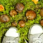 新たなおしゃれを楽しめる、キノコ菌からできたヴィーガンなレザースニーカー