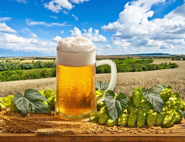 ビールの入ったジョッキが畑の真ん中に置いてある