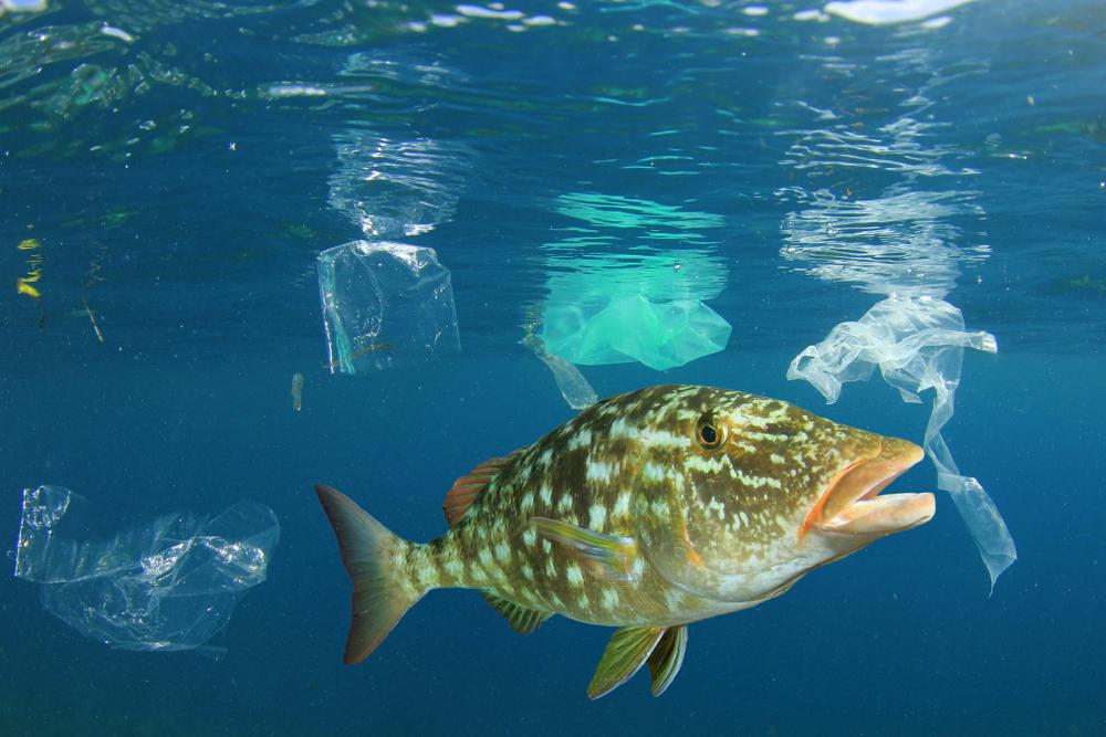 「海洋プラスチック フリー素材」の画像検索結果