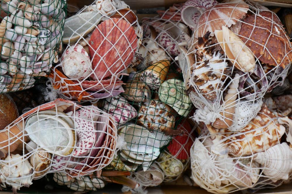 シーフードレストランの貝殻ゴミでつくる防波堤