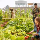 これぞ地産地消。ベルギーのスーパーが屋上で採れた野菜の販売を開始