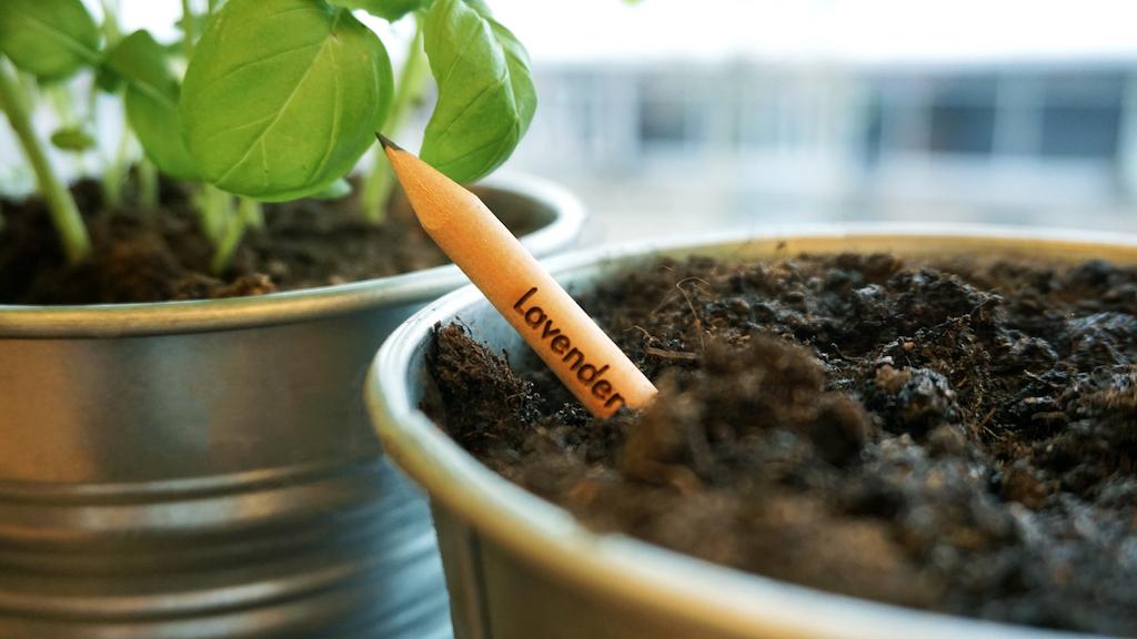 デンマーク発のサステナビリティを表現する、植えられる鉛筆
