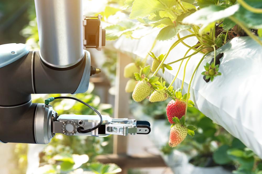 農業の人手不足解消へ。24本「腕」でいちごを収穫するロボットが登場