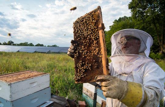 ハチミツシードル