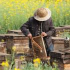アメリカの太陽光発電所で「ハチミツ酒」が生まれる