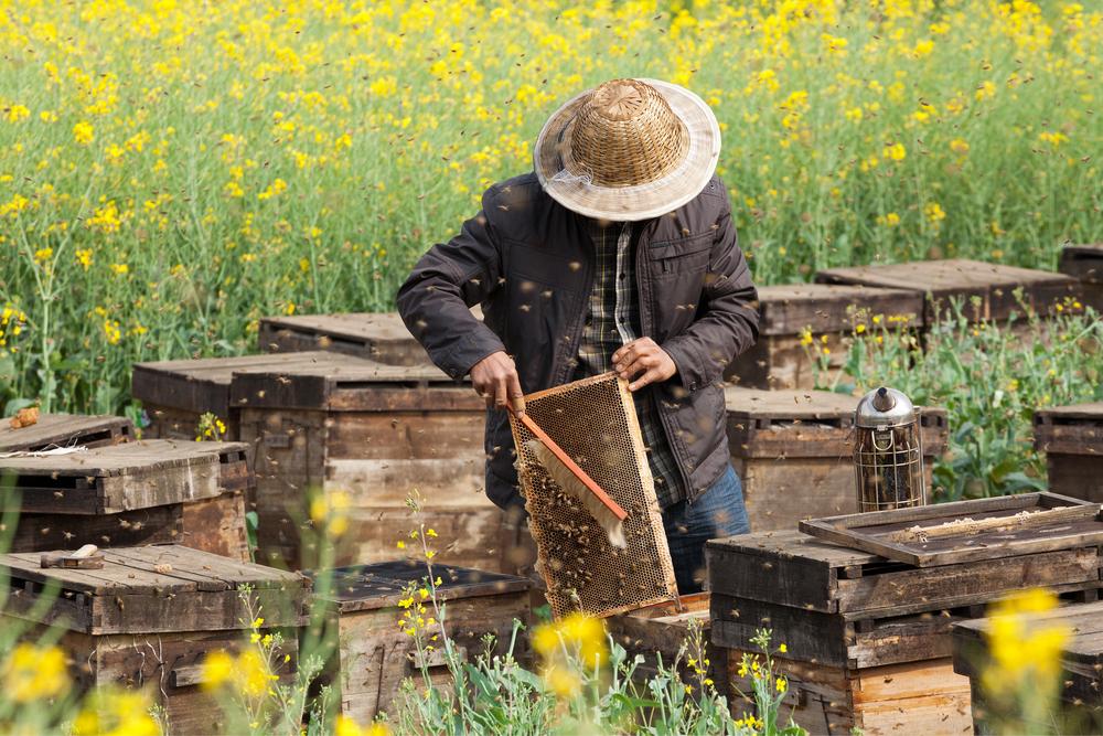 アメリカの太陽光発電所で生まれる「ハチミツ酒」