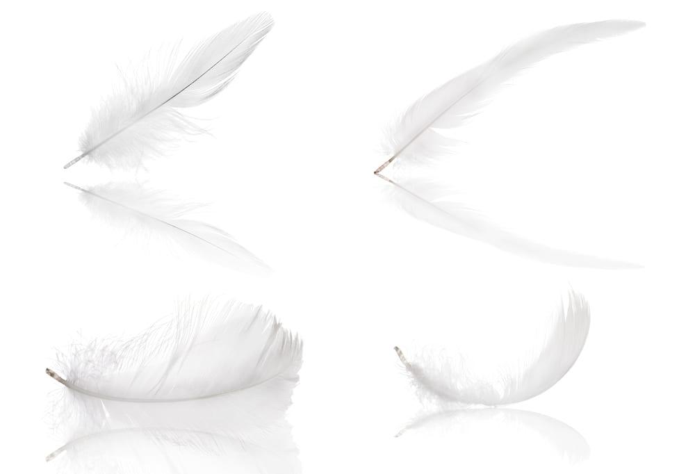 鶏の羽を再利用したサステナブルな断熱包装「pluumo」