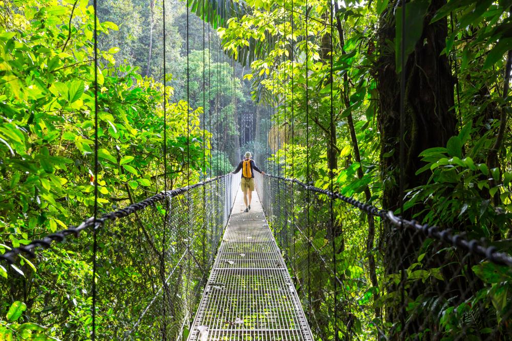 コスタリカの森林