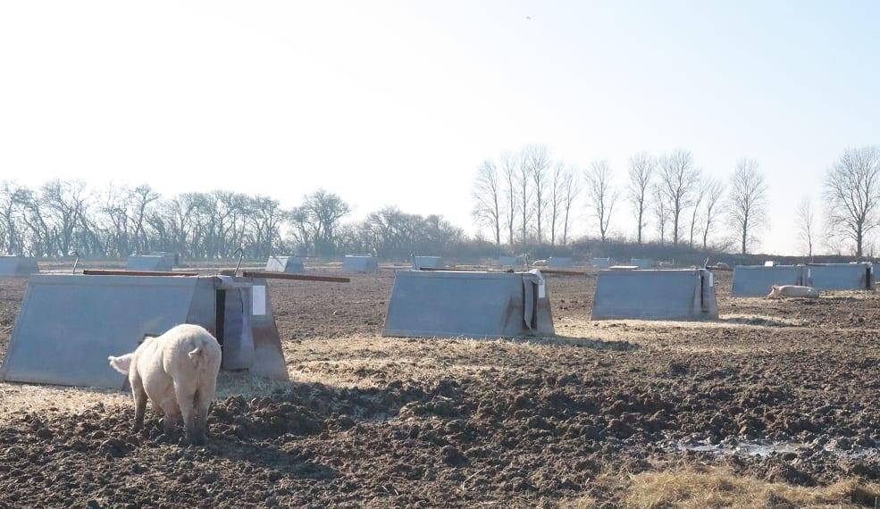 点々と並ぶ豚家族の小屋