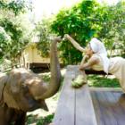 【タイ特集#5】象と泊まれる世界に一つだけのAirbnb。NY出身の女性起業家が解決したい社会問題とは?