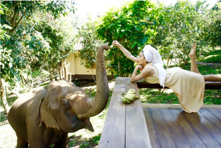 象と泊まれる世界に一つだけのAirbnb「Chai Lai Orchid」