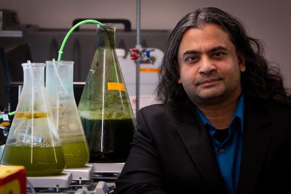 藻をエネルギーに変える技術