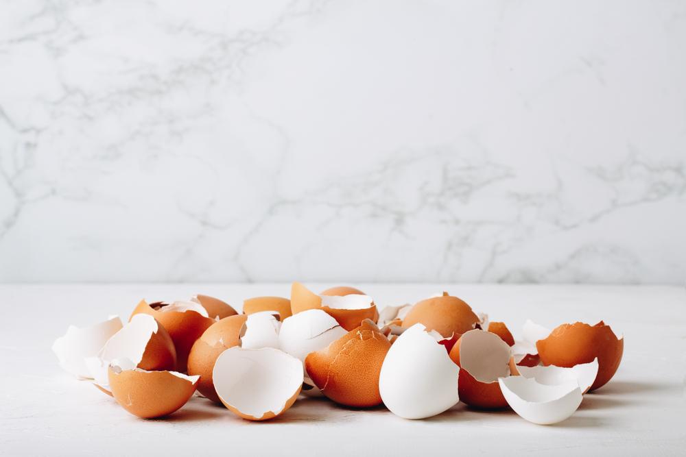 「卵の殻」でエネルギーを貯蔵。ドイツで研究が進むエコな新技術