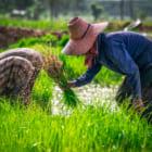 農家と小売を直接つなぐ。農業サプライチェーン透明化を目指すインドネシアのソーシャルスタートアップ2社の挑戦