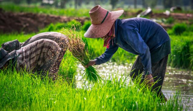 インドネシアの農家