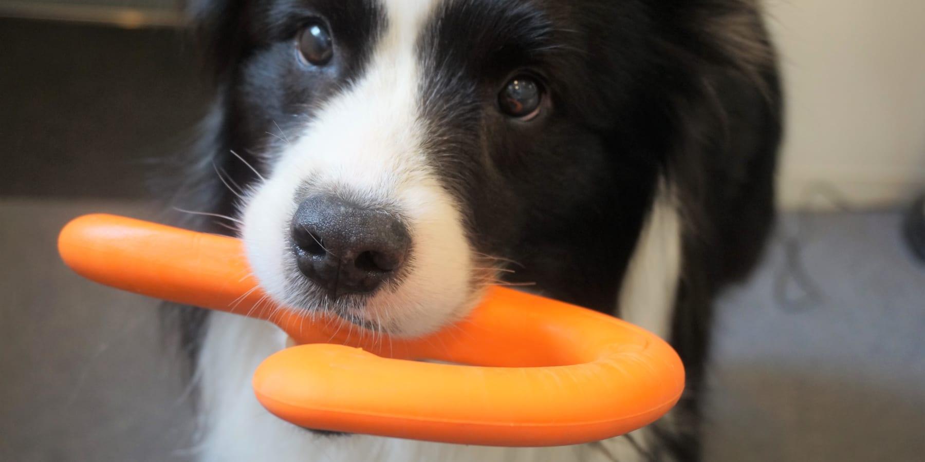 環境にも社会にも優しい犬用おもちゃ「ウェスト・ポウ」