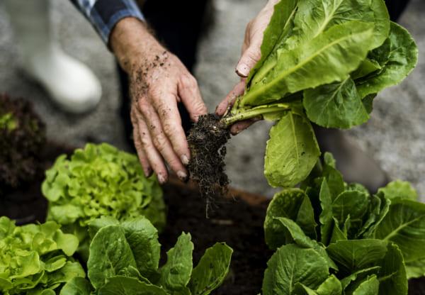 農業を効率化する技術