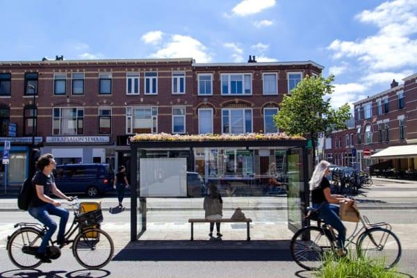 ユトレヒトにできた蜂にやさしいバス停