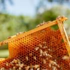 ハチ激減をストップ。都会の自宅でできたての蜂蜜を収穫できる「b-box」