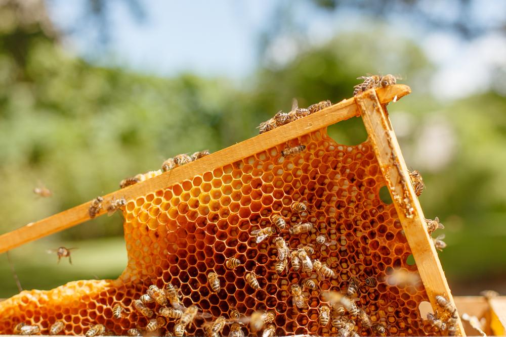 都会の自宅でできたての蜂蜜を収穫できる「b-box」