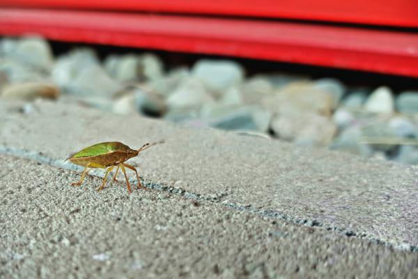 昆虫の避難所になる家具「PLEASE STAND BY」
