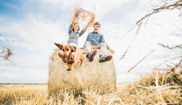麦わらを使った衣服