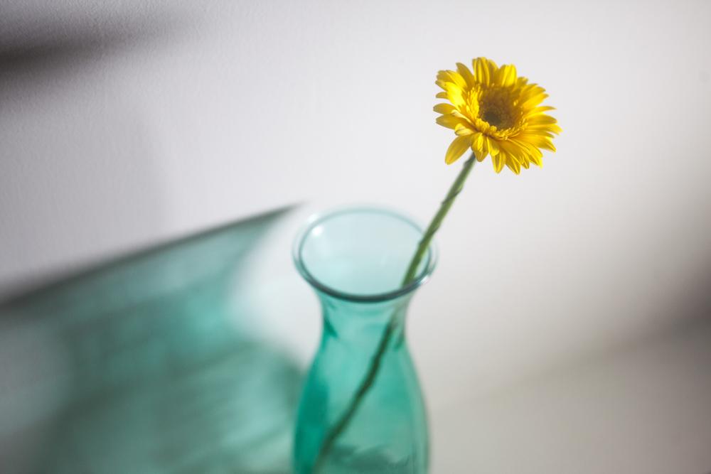 一本の花の画像
