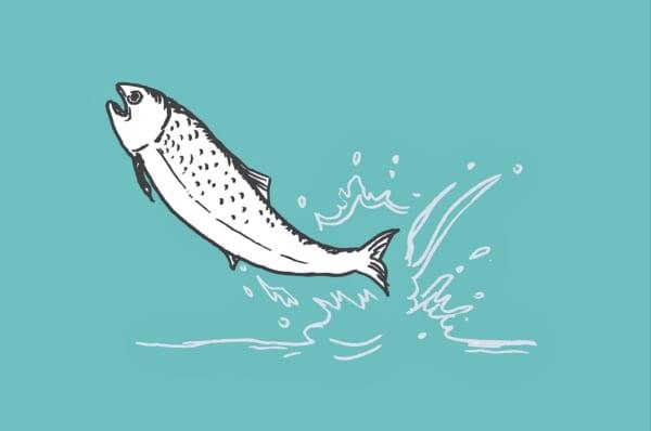 上流に向かう鮭
