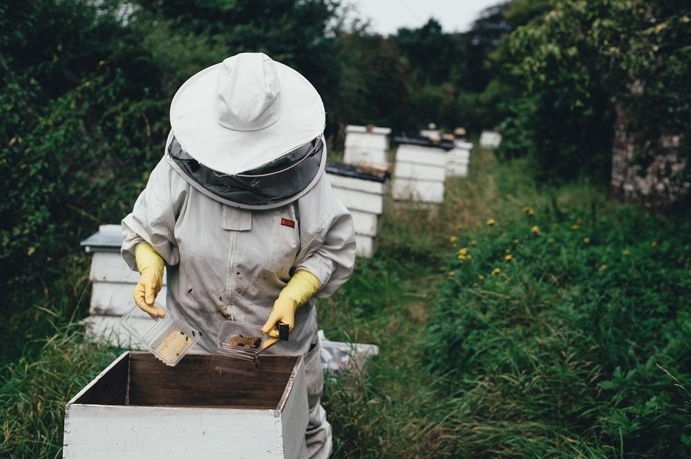 養蜂家が増えるウエストバージニア州