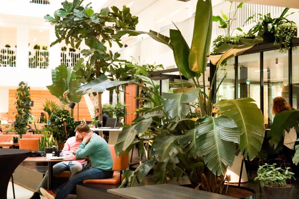 緑が生い茂るオフィス