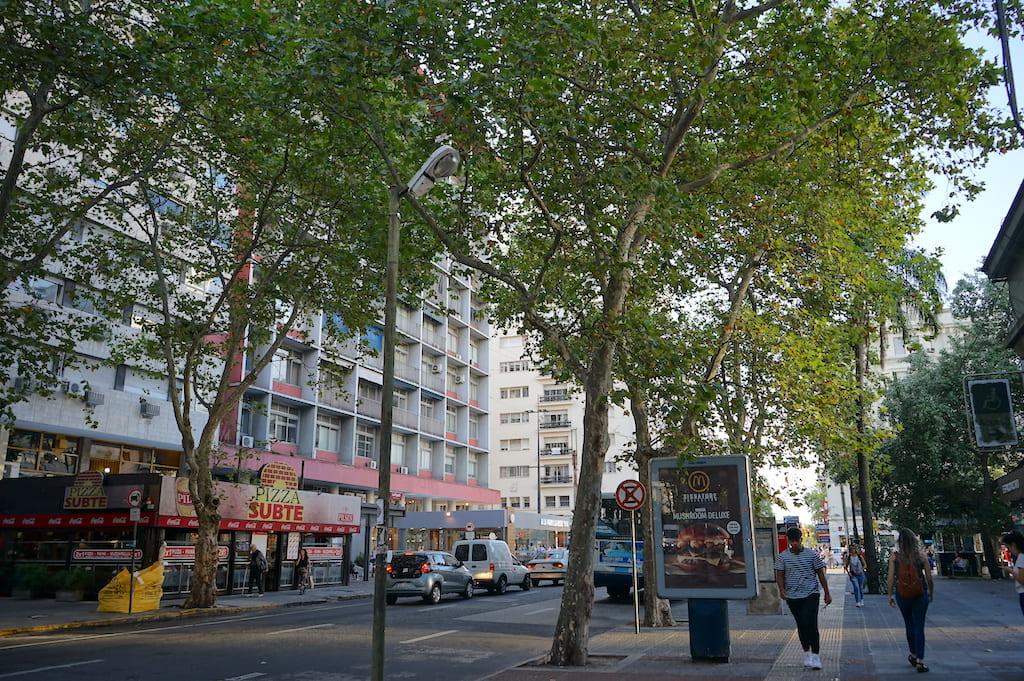 建物と大きな木