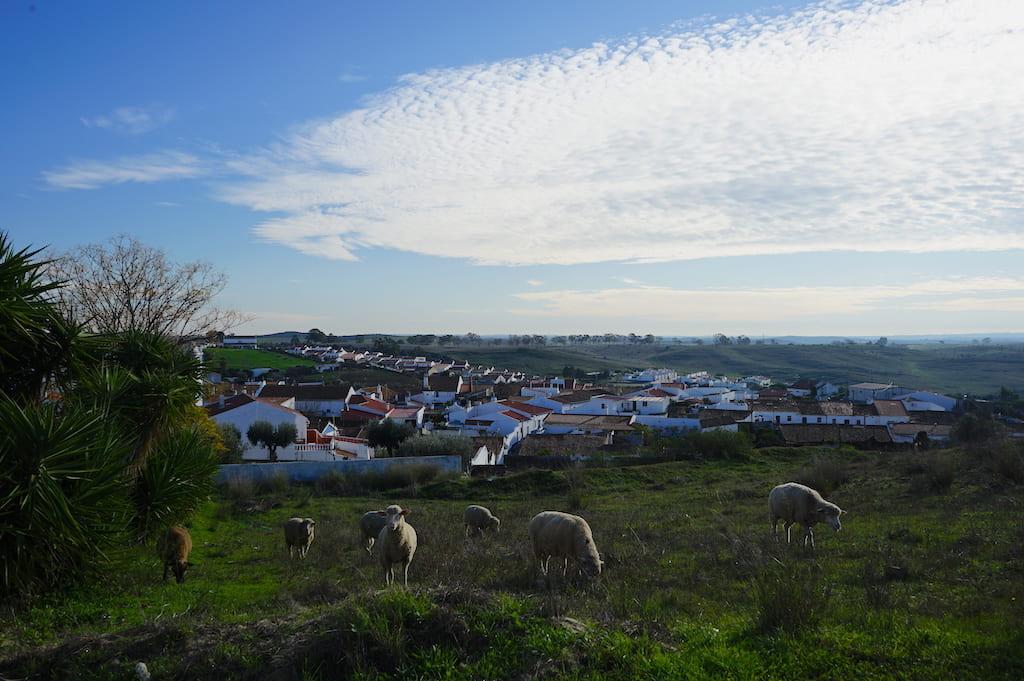 青空と羊たち
