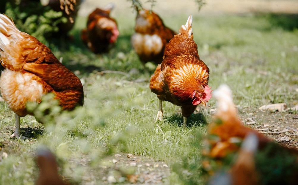 印字された農場名を入力すると、鶏の平飼い農場にVRでリモート訪問できる卵パック