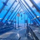 アートでサンゴ礁を救う。グレートバリアリーフにできた海中美術館「MOUA」