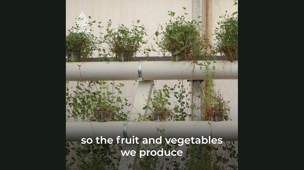 マットレスで野菜を育てる