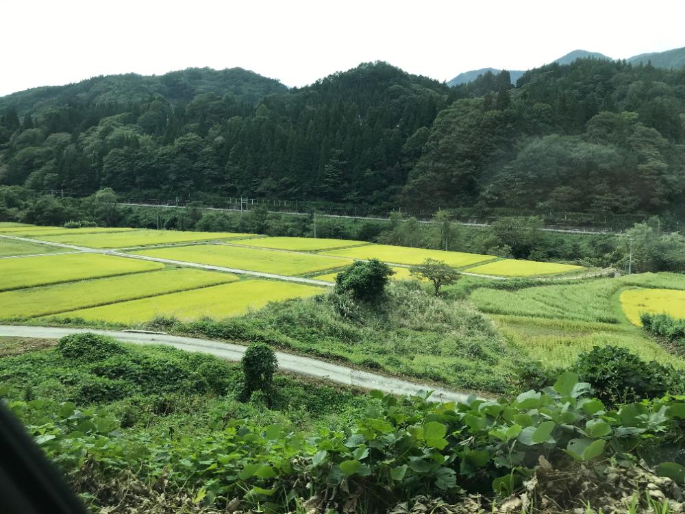 小谷村の棚田