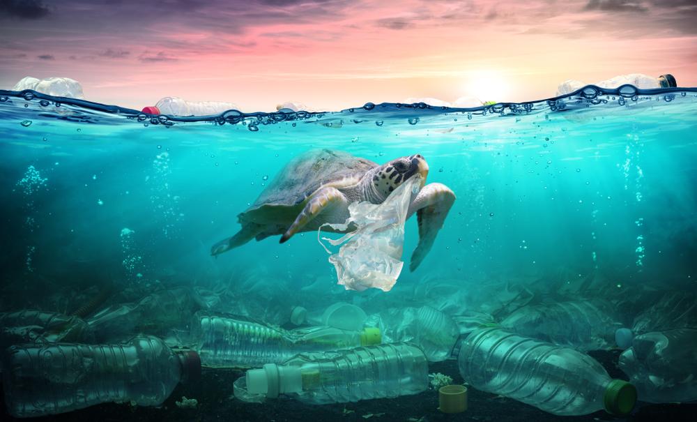プラスチックを食べるウミガメ