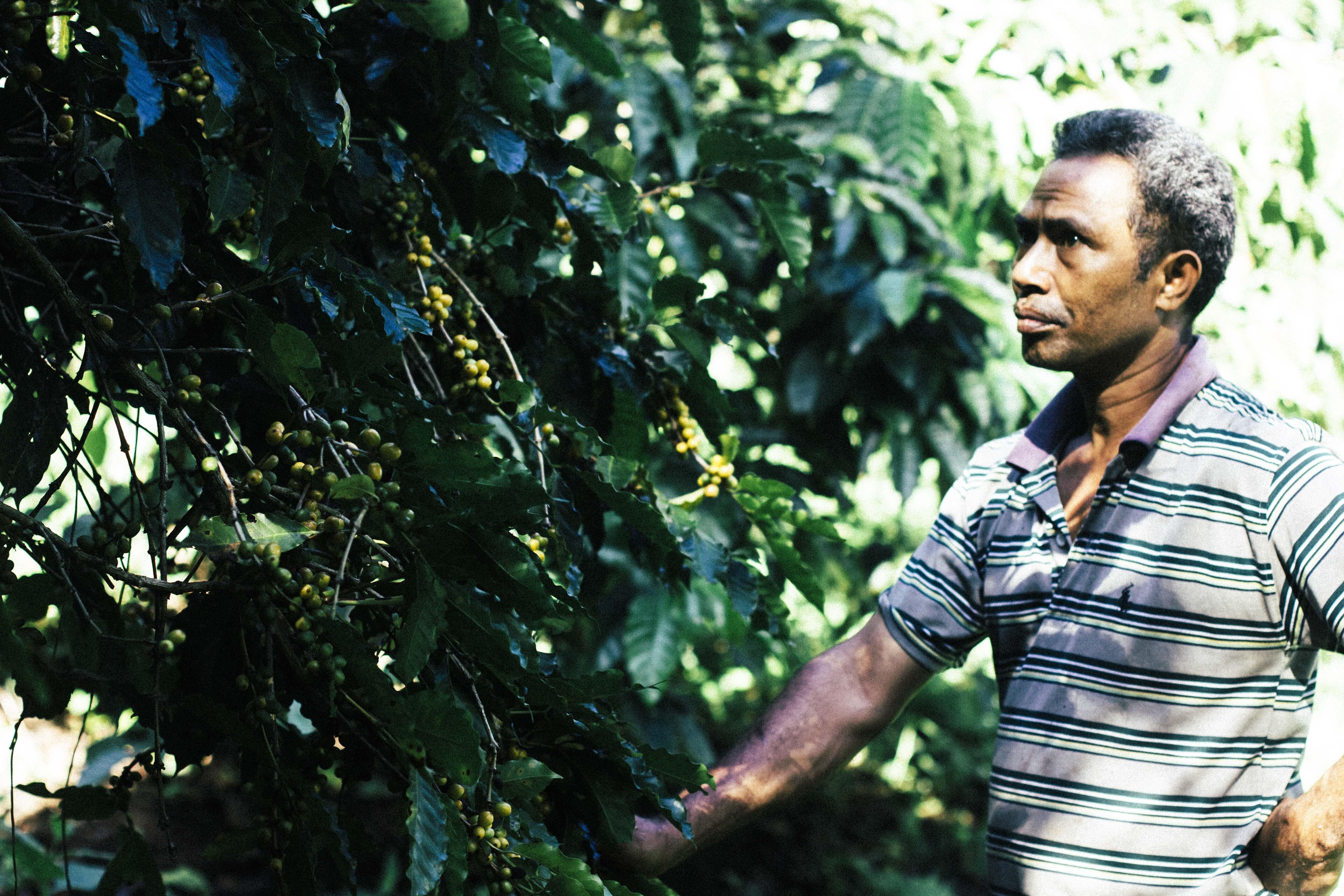 コーヒー農家