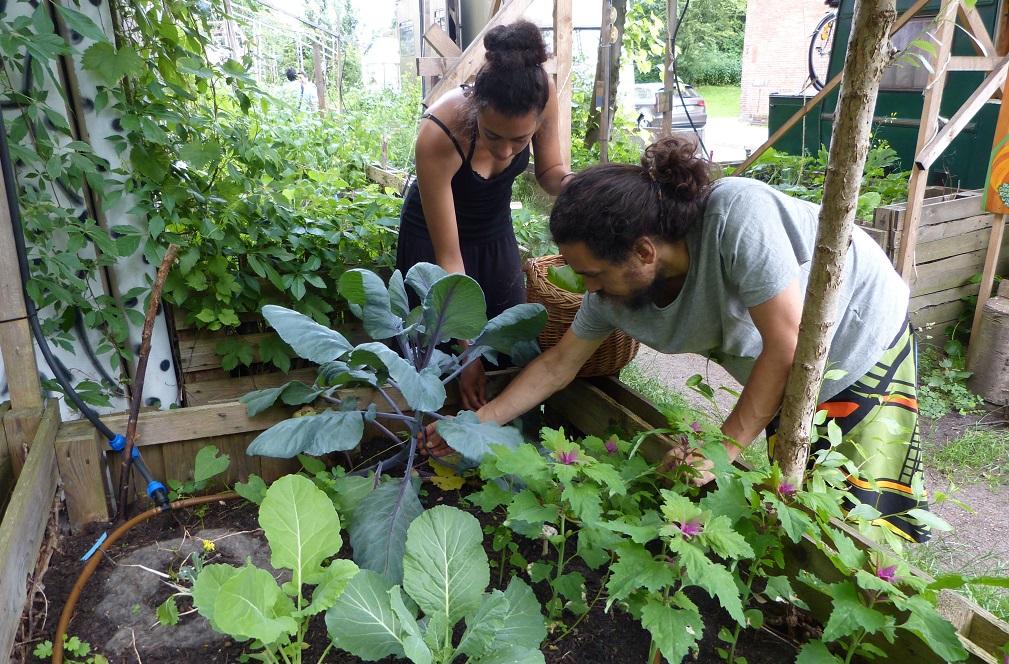 野菜を育てる