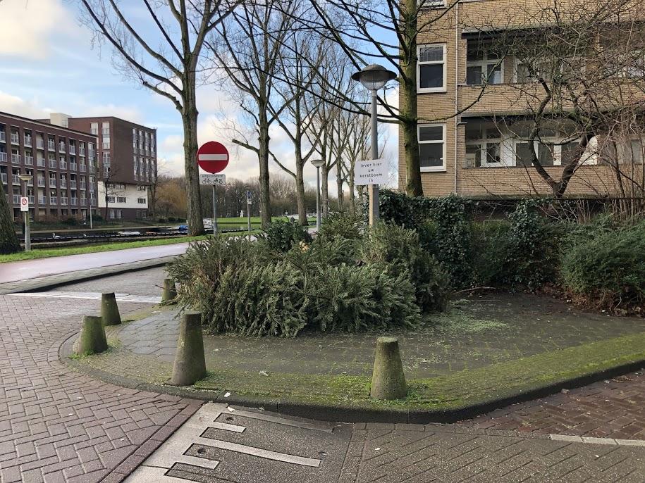回収場所に持ち寄られたクリスマスツリー(筆者撮影)