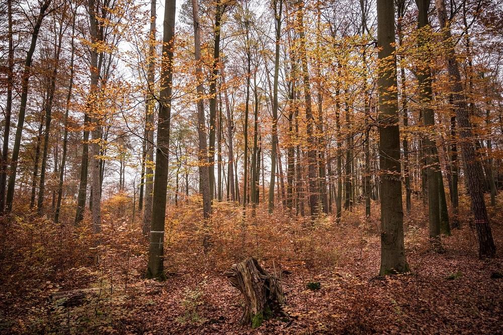 秋を迎え紅葉するダーネンルーダーの森。Photo by Tim Wagner