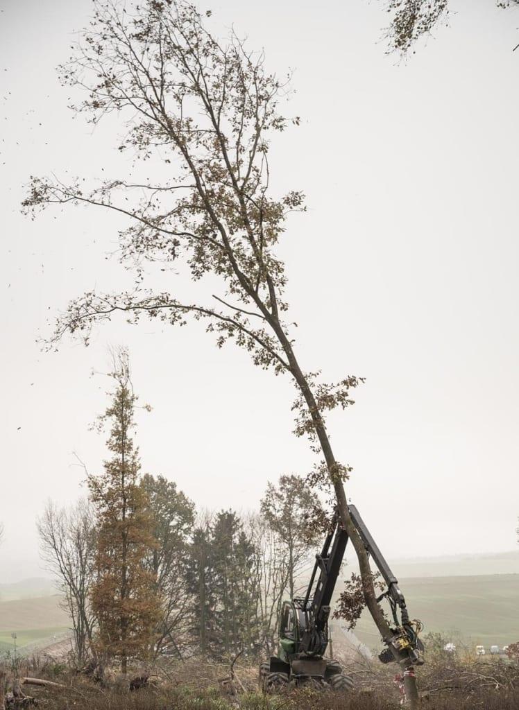 伐採される木々。Photo by Tim Wagner