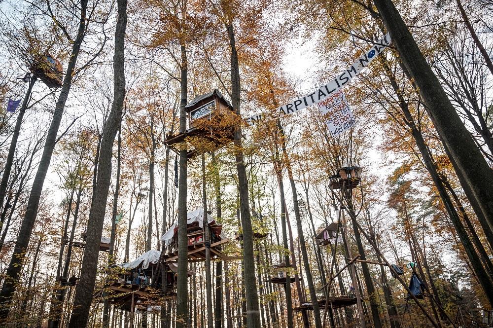 ツリーハウスを建てて行う森林占拠アクティビズム。Photo by Tim Wagner